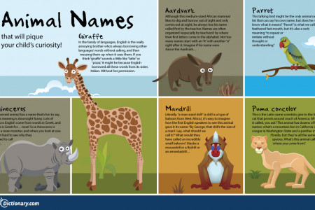 Animal Names That Will Pique Your Child's Curiosity Infographic