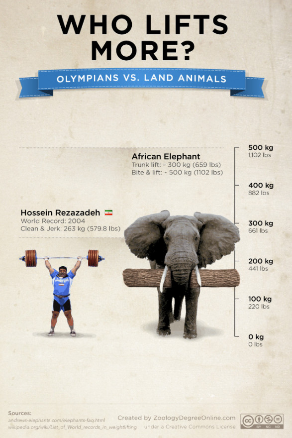 Animals Vs Olympians - Who Lifts More?