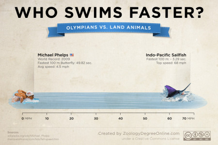 Animals Vs Olympians - Who Swims Faster? Infographic