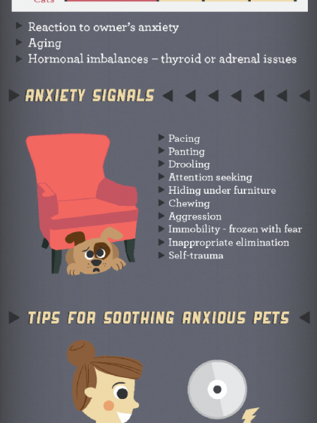 Answers for Pet Anxiety Infographic