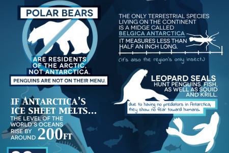 Antarctica Fun Facts Infographic