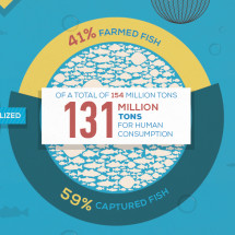 Aquinetix - The big picture Infographic