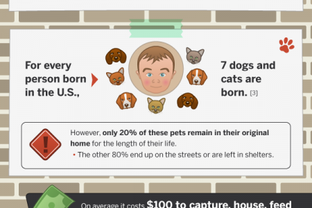 Are Pets Victims of the Recession? Infographic