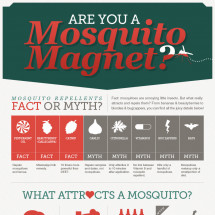 Are You A Mosquito Magnet Infographic