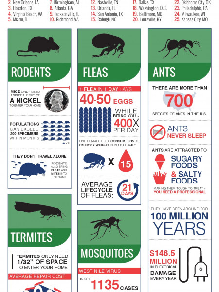 Arrow Exterminators: 2014 Pest Threats Infographic