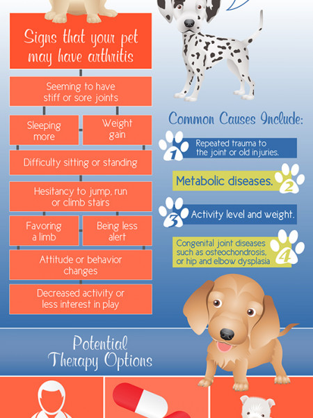 Arthritis In Your Pet Infographic