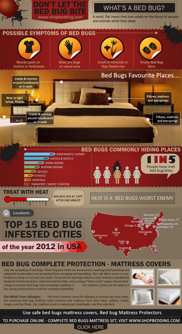 Bed bug mattress protectors  Infographic