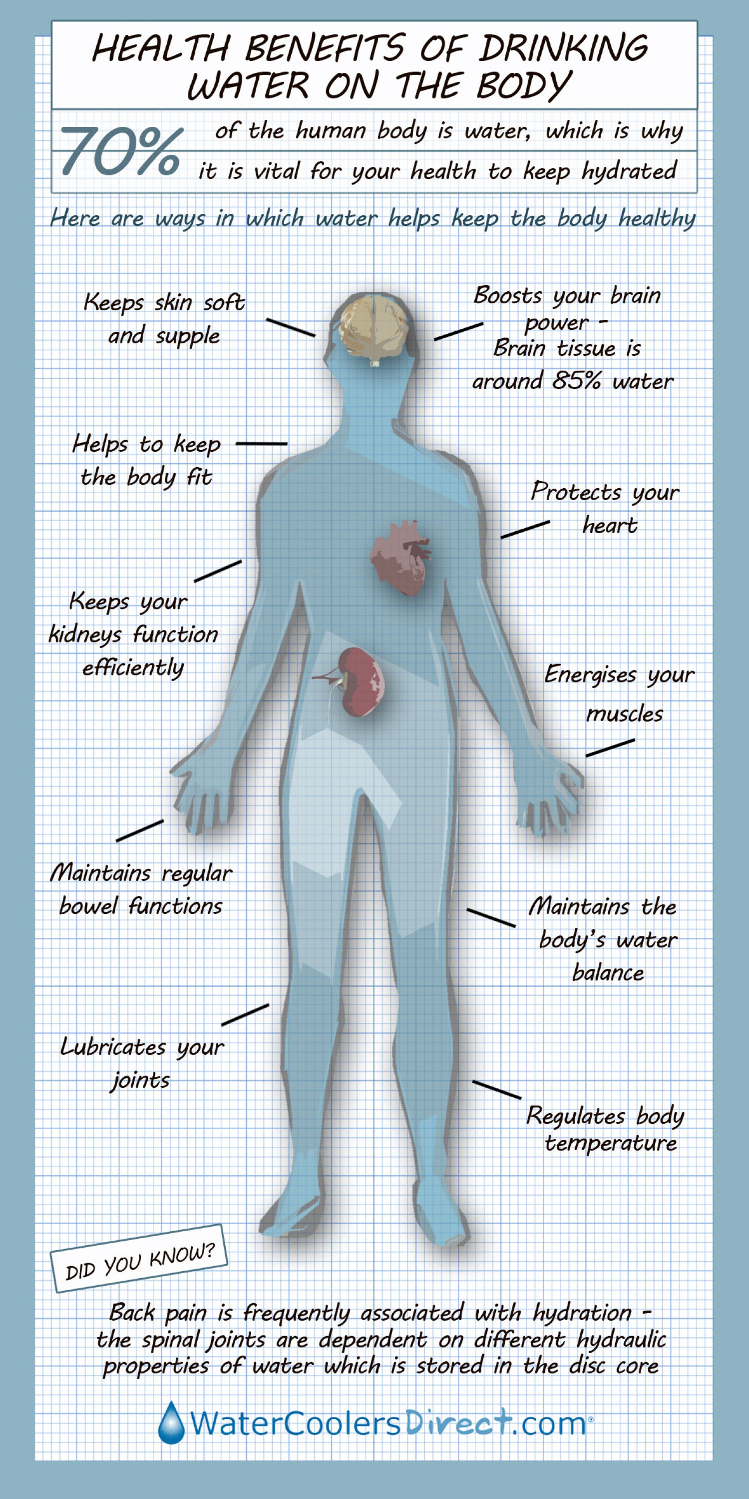 Benefits of Water on the Body Infographic