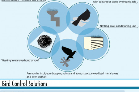 Birds damages and their Control solutions Infographic
