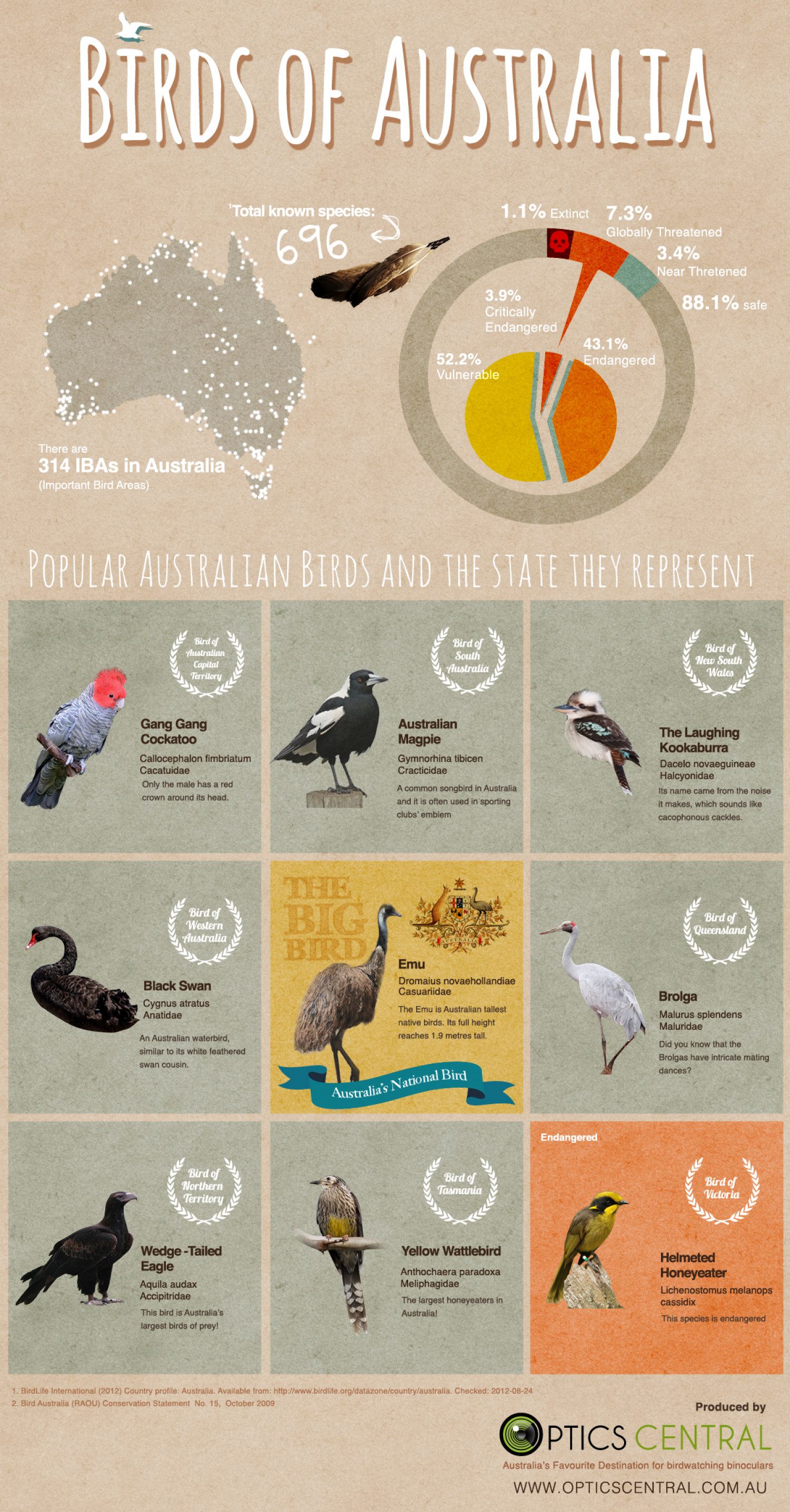 Birds of Australia Infographic