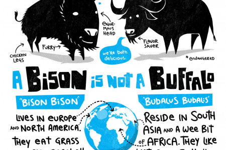 Bison vs Buffalo Infographic