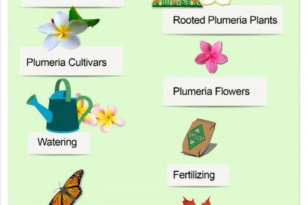 Bob Walsh Plumeria Care 101 Infographic