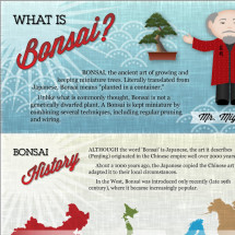 Bonsai Infographic