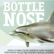 Bottle Nose  Infographic