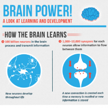 Brain Power! A Look at Learning and Development  Infographic