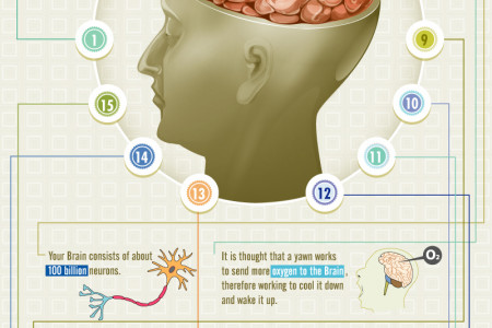 Brainology -Some Amazing Facts you didn't Know About your Brain Infographic