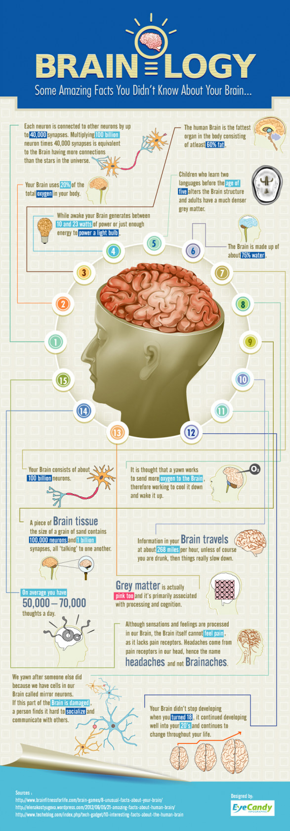 brainology some amazing facts you didnt know about your brain 519a2c0a6a4c9 w587 Interesting facts about the brain
