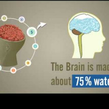 Brainology-Amazing Facts about our Brain Infographic