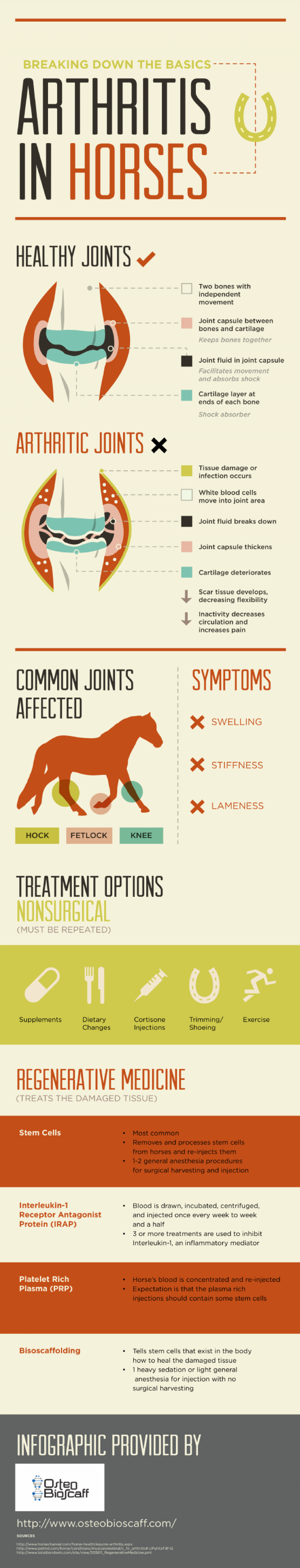 Breaking Down the Basics: Arthritis in Horses Infographic