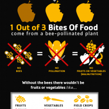 Buzzing Off! How Dying Bees Affects You! Infographic