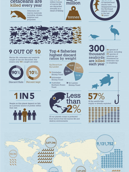 Bycatch Infographic