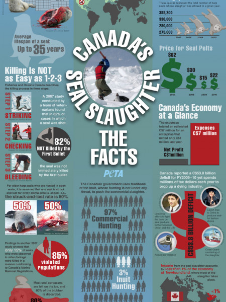 Canada's Seal Slaughter: The Facts  Infographic