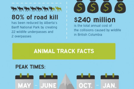 Car Accidents Caused By Wildlife in Alberta & BC Infographic