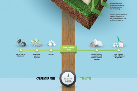 Carpenter Ants & Termites Infographic