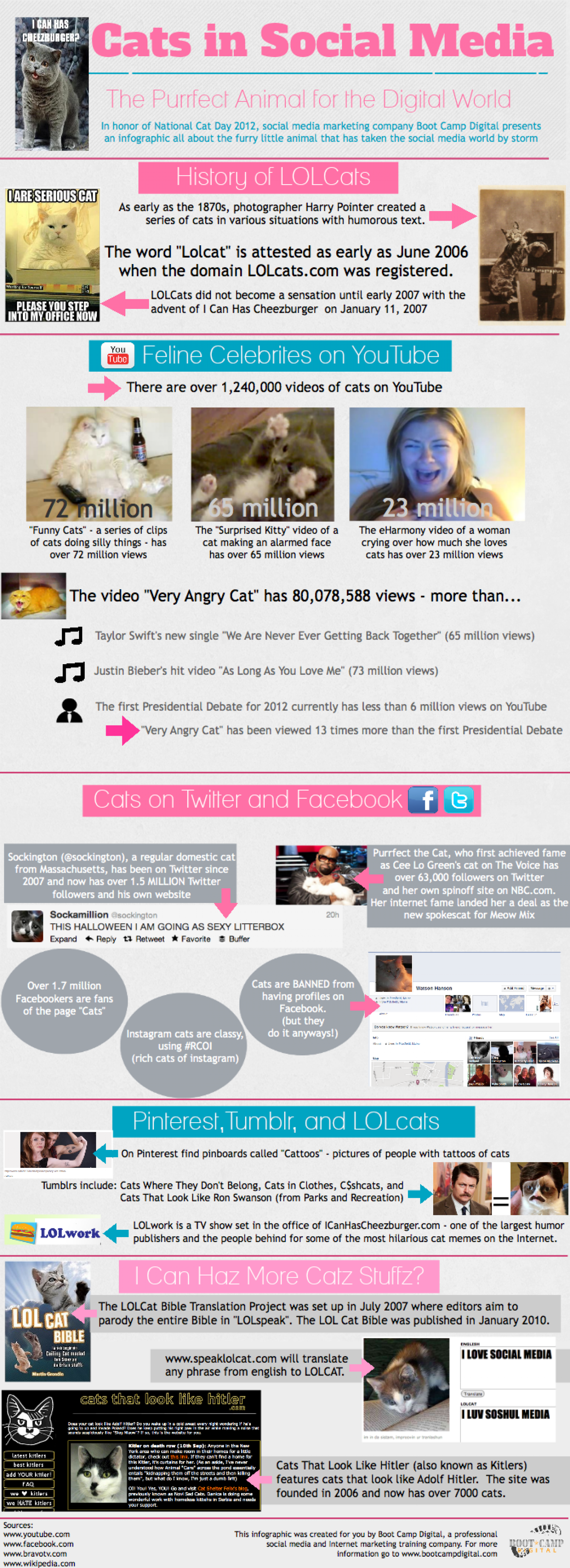 Cats in Social Media Infographic