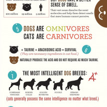 Cats vs. Dogs Infographic
