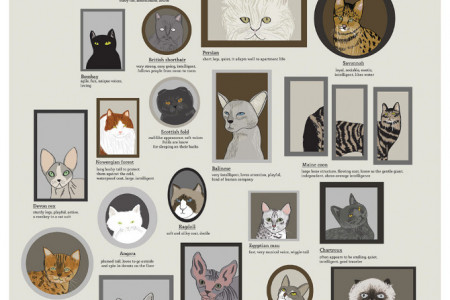 Cats! Infographic