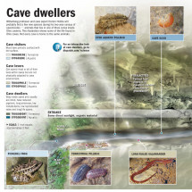 Cave Dwellers Infographic