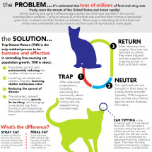 Celebrate National Feral Cat Day! Infographic