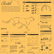 Cheetah: Nature's speed machine (animated) Infographic