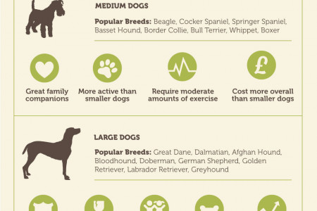 Choosing Your First Dog Infographic