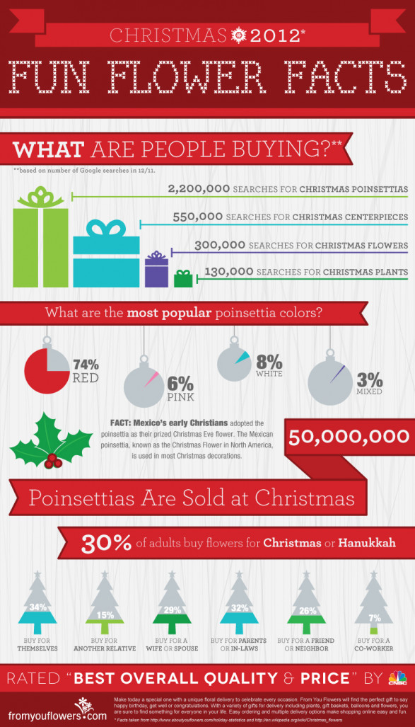 Christmas Flower Infographic