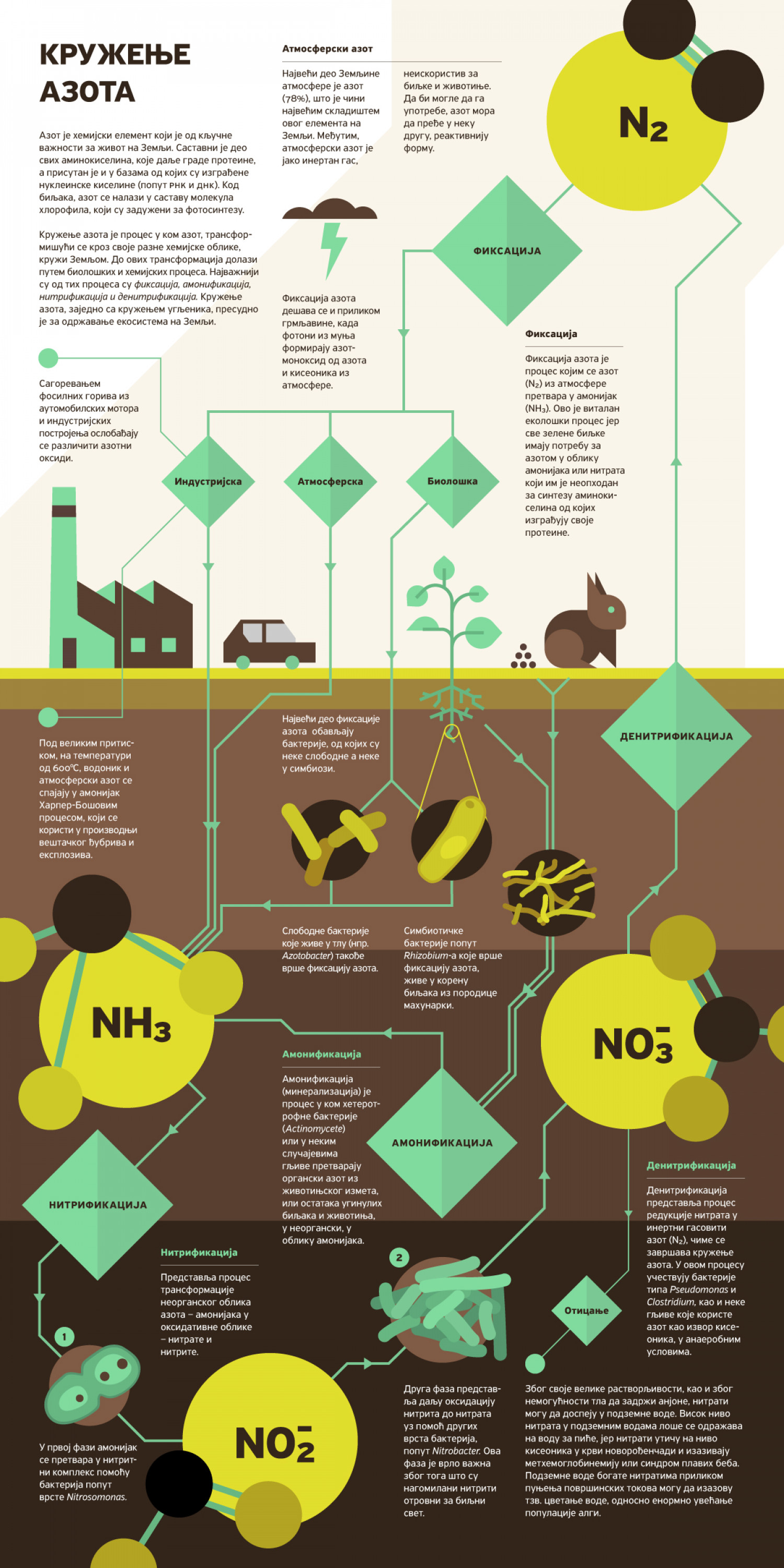 Circulation of Nitrogen Infographic