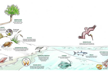 Coastal graphic Infographic