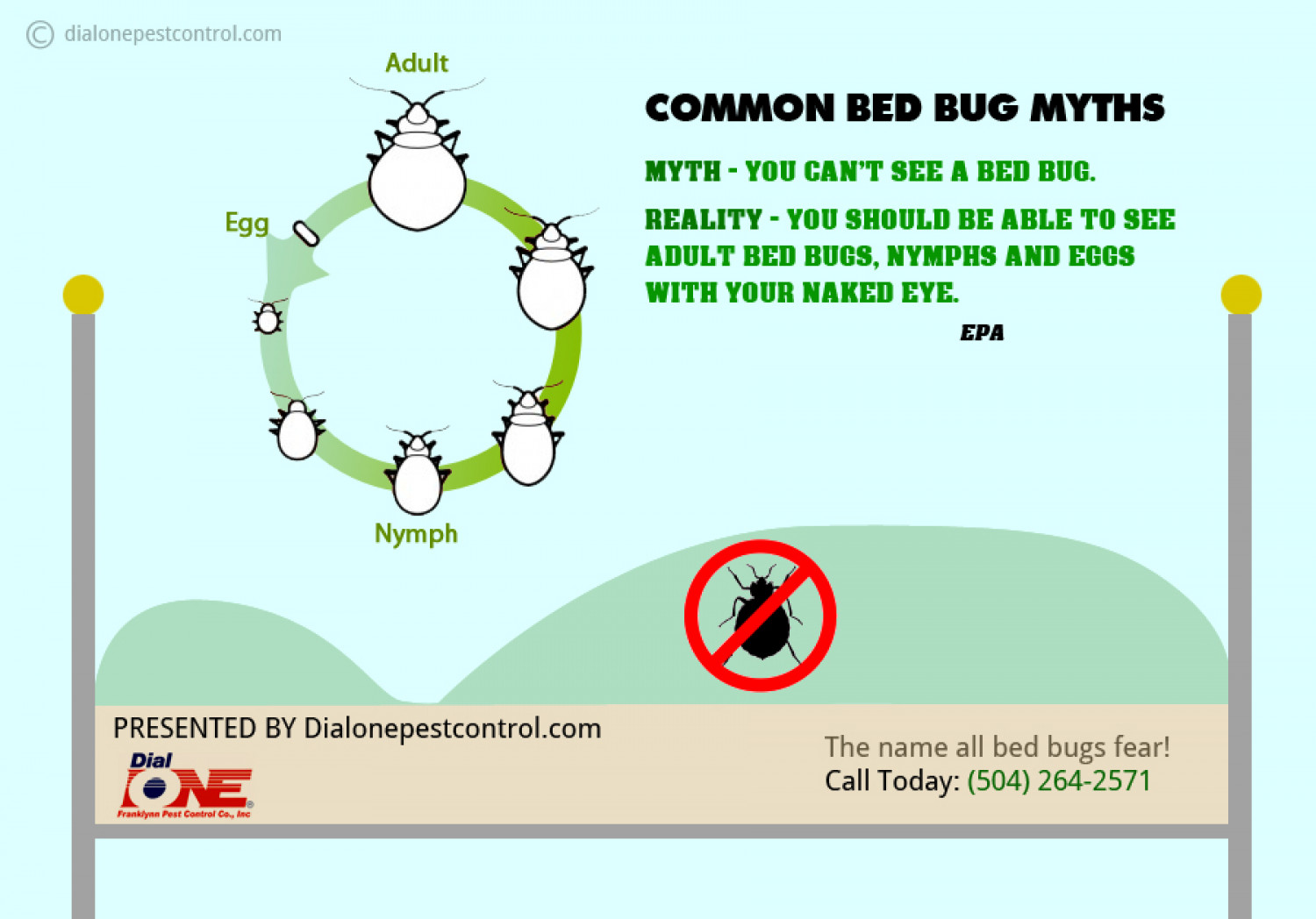 Common bed bug myths Infographic