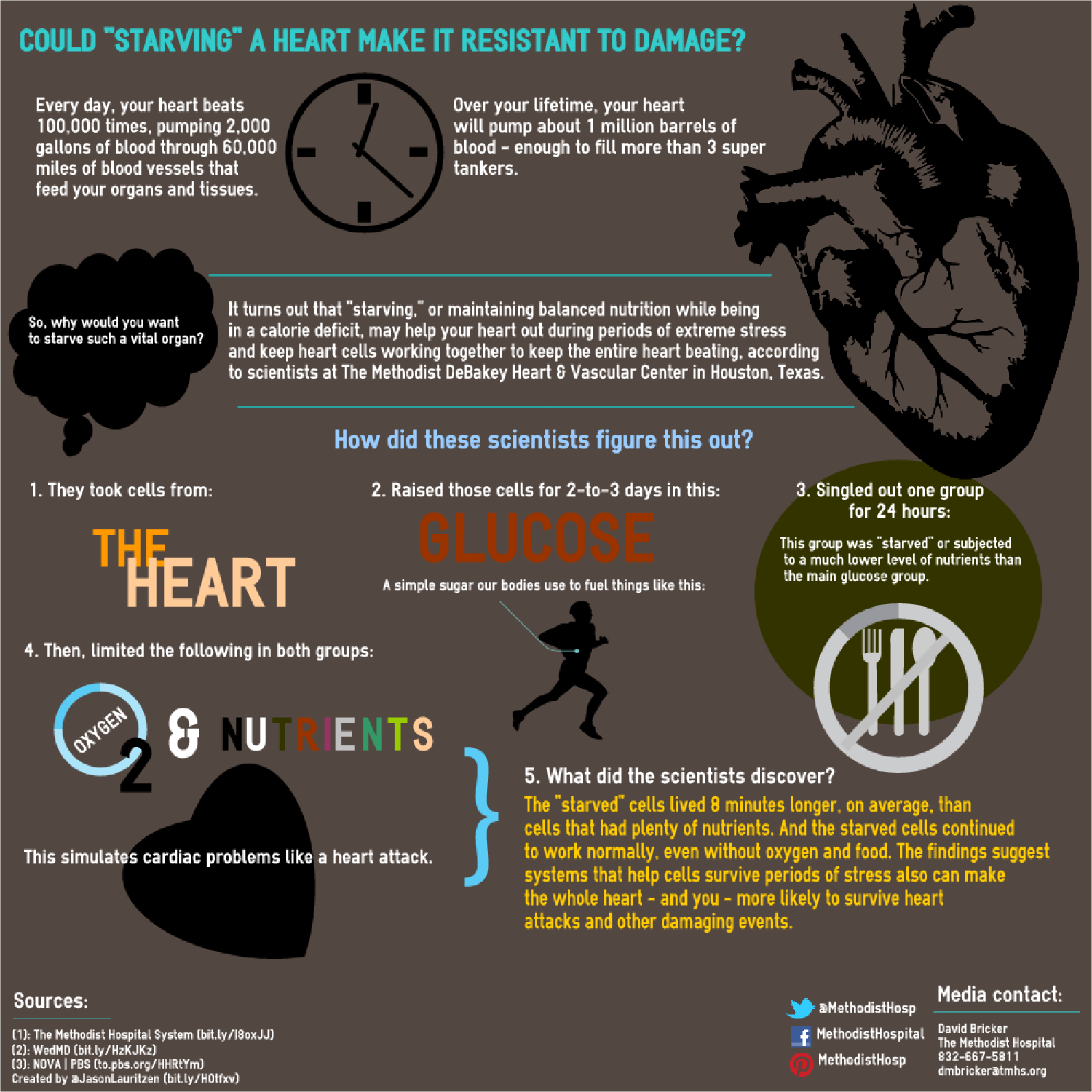 Could starving a heart make it resistant to damage? Infographic