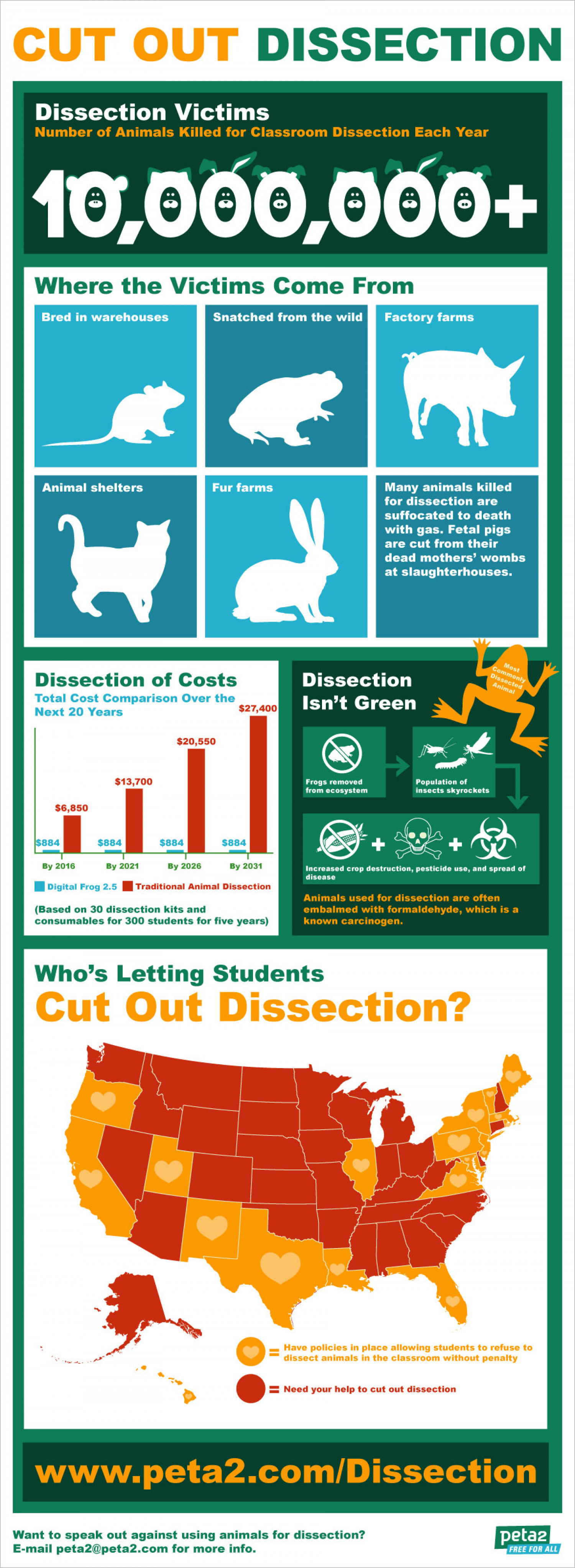 Cut Out Animal Dissection Infographic