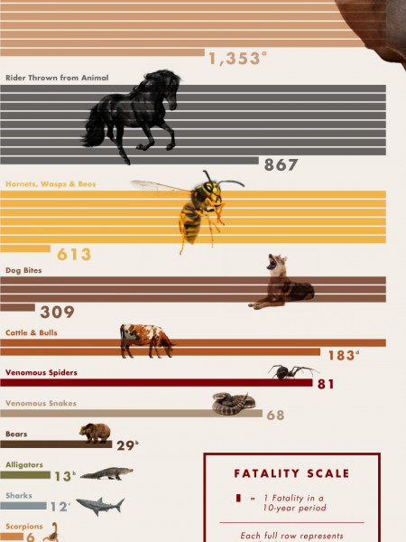 Deadliest Animals in the US Infographic