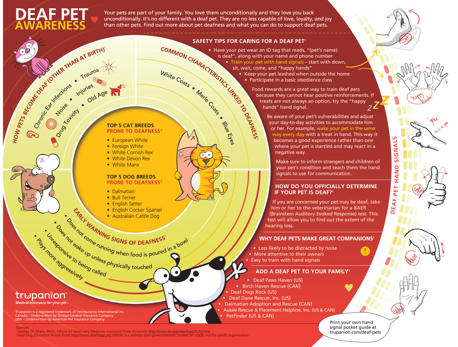 Deaf Pet Awareness Infographic