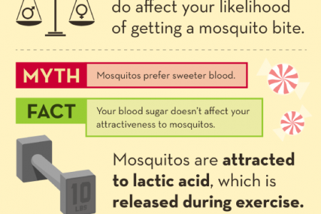 Debunking Common Mosquito Myths Infographic