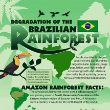 Deforestation of the Amazon Rainforest Infographic