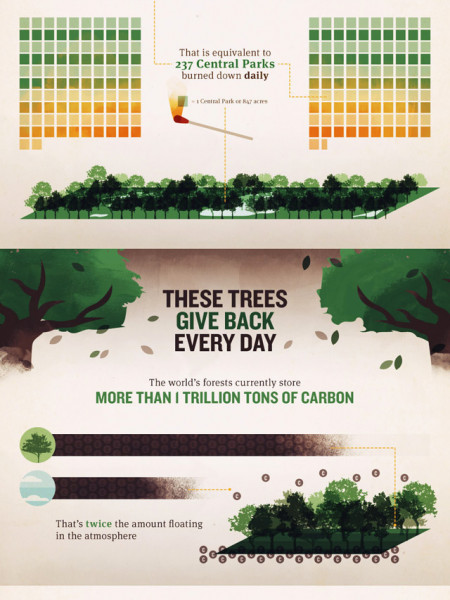 Deforestation: Our Disappearing Woodlands Infographic