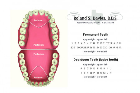 Dental Chart Infographic