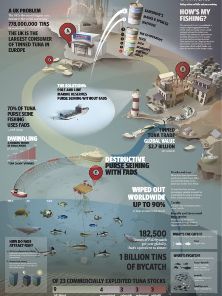Destructive Tuna Fishing Infographic