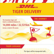 DHL Tiger Delivery - The Journey Infographic