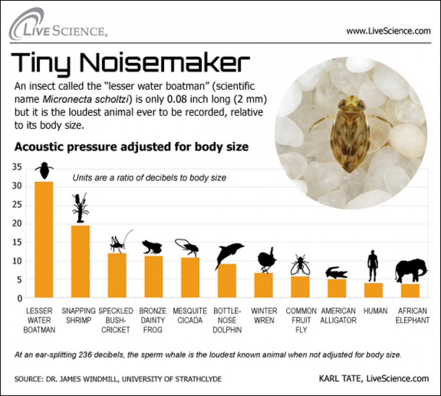 Dissecting Decibels: The Loudest Animals Infographic